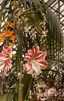 orchids-lilies-palms-1945-by-spencer-sm