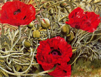 poppies-1938-by-spencer-sm
