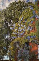 wisteria-at-englefield-1954-by-spencer-sm