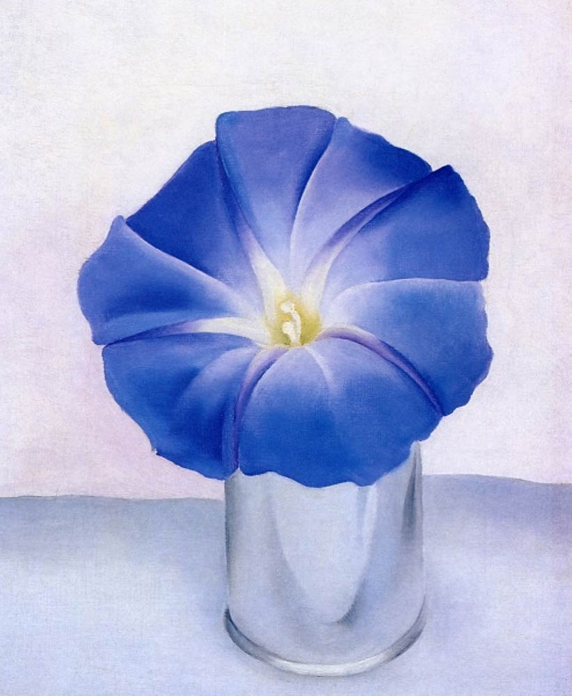 blue-morning-glory